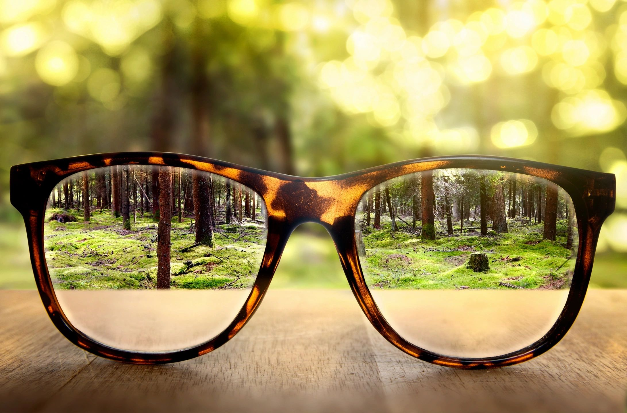 Glasses looking into the woods