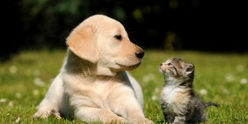 Pet insurance plans. Dogs and cats. Veterinarian.