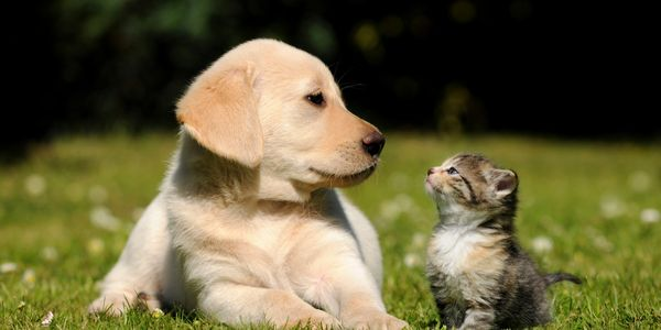 A kitten and a puppy who both know to call Tonya Zimmern with their real estate needs