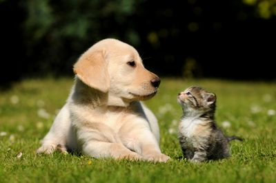 Puppy and kitten looking at each other