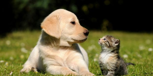 puppy and kitten in a clearing