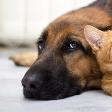 Dog training and cat sitting services