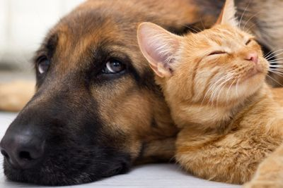 dog and kitten snuggling