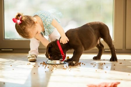 Feeding a puppy dry food.