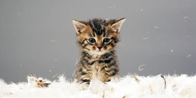 Kitten sitting in feathers