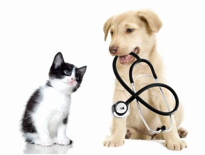 Mobile Veterinarian in Raleigh - Dr. Shann Burroughs - Mobile Vet Service in Raleigh