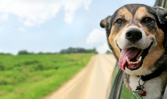Dog friendly motorhomes