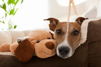close up of a cute dog snuggled with his stuffed animal on a dog bed