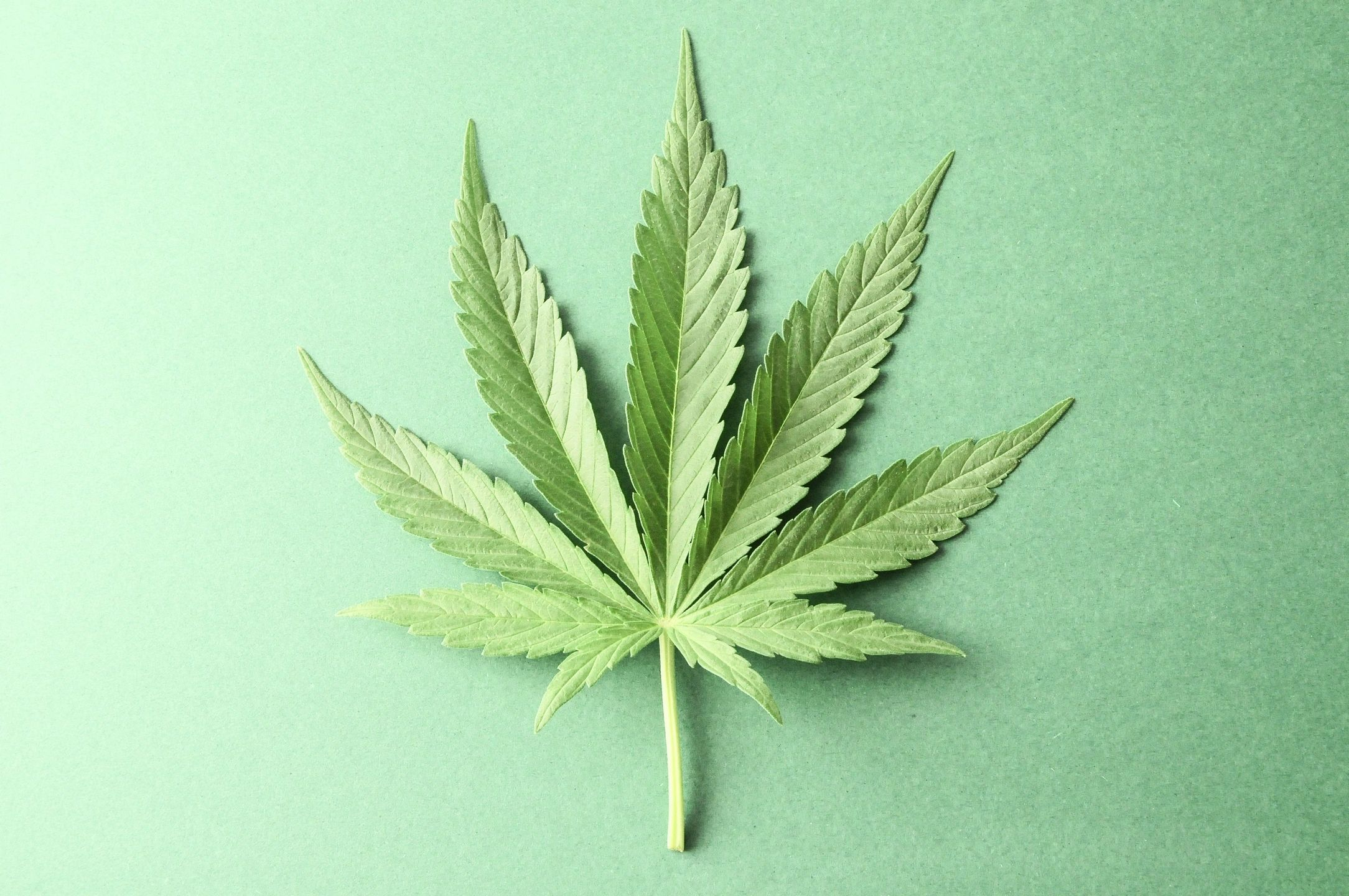 Cape Cod Canna Doc Medical Marijuana Certification