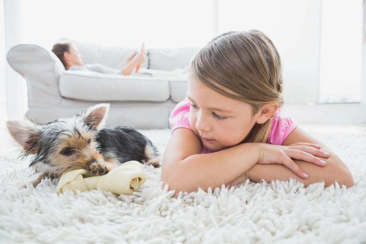 Carpet Cleaning Safe For Kids and Pets