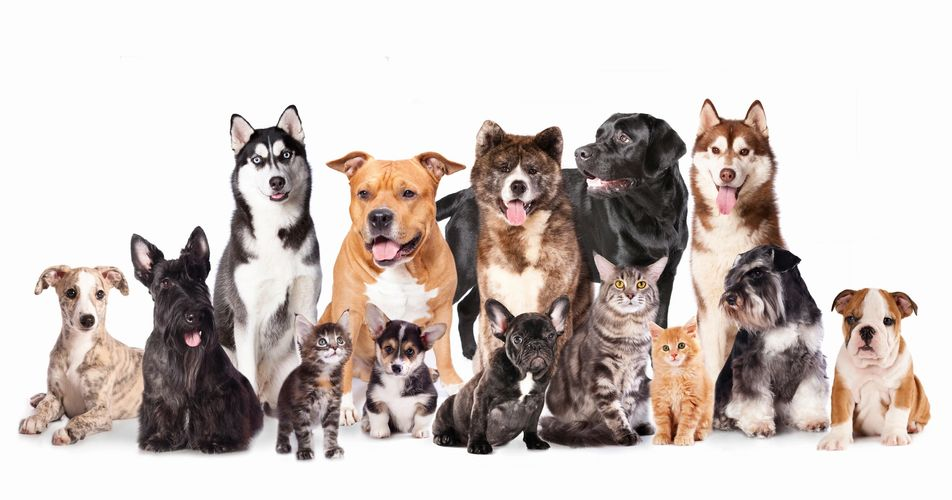HUMAN GRADE PET FOOD, TREATS, QUALITY PET FOOD, RAW DIET, PET SUPPLIES, HOLISTIC PET SUPPLIES JENIS
