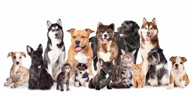 14 different dogs and cats . Mixed breed and colors.