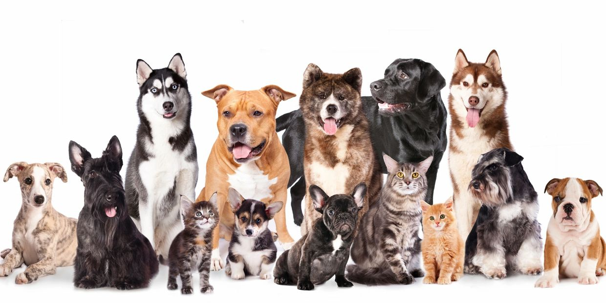 Dog and cat pet sitting clients