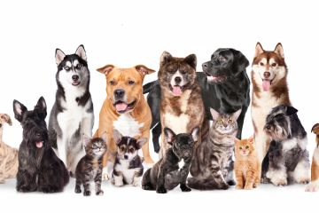 Large group of dogs and cats looking forward.