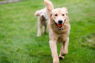 With our indoor and outdoor activities your dog is sure to enjoy their time with us rain or shine!