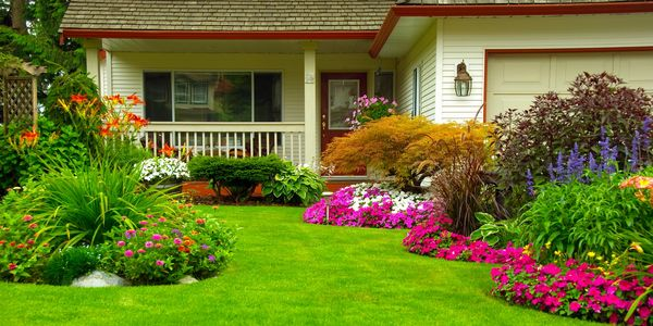 Residential lawn is the envy of the neighborhood with White Front feed & Seeds lawn care products