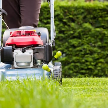 Lawn mowing with fresh cut lawn and perfectly trimmed hedges.