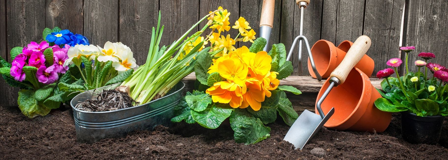 Gardening; Activity; Dementia;  adult day care; Social Club; First Light; Memory Care,
