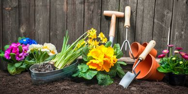 Gardening for Window Boxes