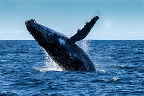 mexico baja california whales wine cruise boat tour vacation group travel catavina scammon sealife