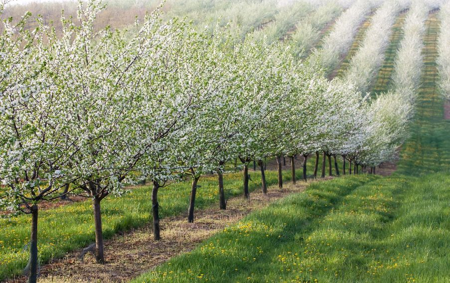 CarolinaZen Bath + Body. Our skin care starts here in local orchards and berry patches