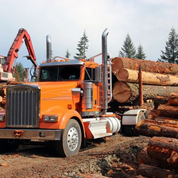 Paper Pulp timber wood products logs lumber shipping saw mills appalachian hard wood hardwoods