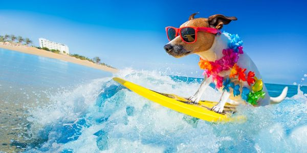 A dog on a surfboard. We all need one. How cool is this one?