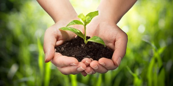 Image of hands holding soil with a plant growing in it. Gratitude for the Earth.