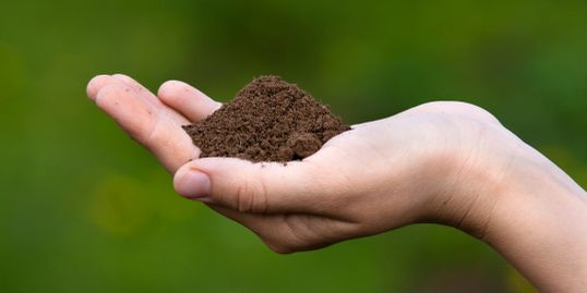 The best type of soil for growing turf is a sandy loam.