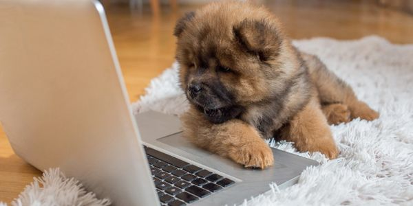 A dog working on laptop