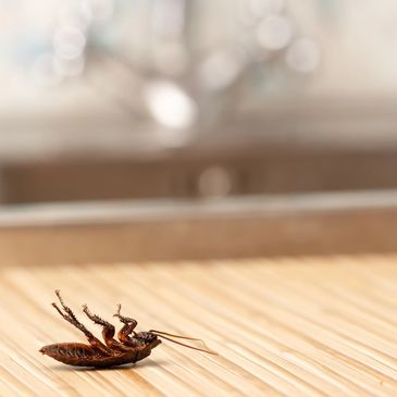 Pest Control, Ant control, roach control, mosquito control, spider control, rodent control, wildlife
