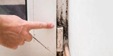 Mold identification and remediation consultation.