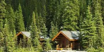 Two cabins in thick forest, sunny and bright