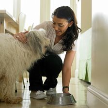 Professional Pet Care in Bucks County PA-Household Services Agency - 267-404-3139