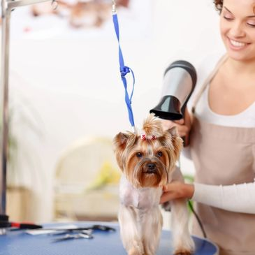 Whether your pet needs a just a little pampering or a full grooming, we have you covered!