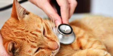 A cat is being examined to illustrate a list of Alternative/Subsidized Pet Care Options