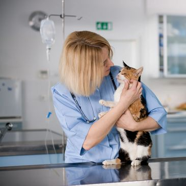 Veterinarian holding a cat