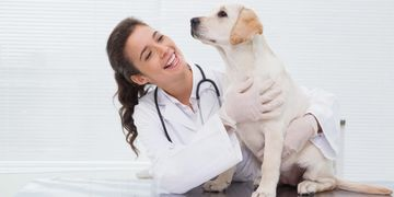 Pet Insurance at The Marc Sollee Agency 2335 S Lindsay Rd #101 Gilbert, AZ 85295 480-900-8010