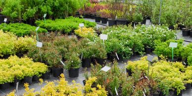 From beautiful flowering trees to evergreen shrubs