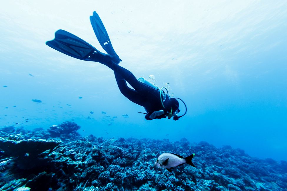 Diver in water with fish