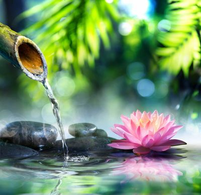 Flower essence therapy is a great alternative to holistic medicine