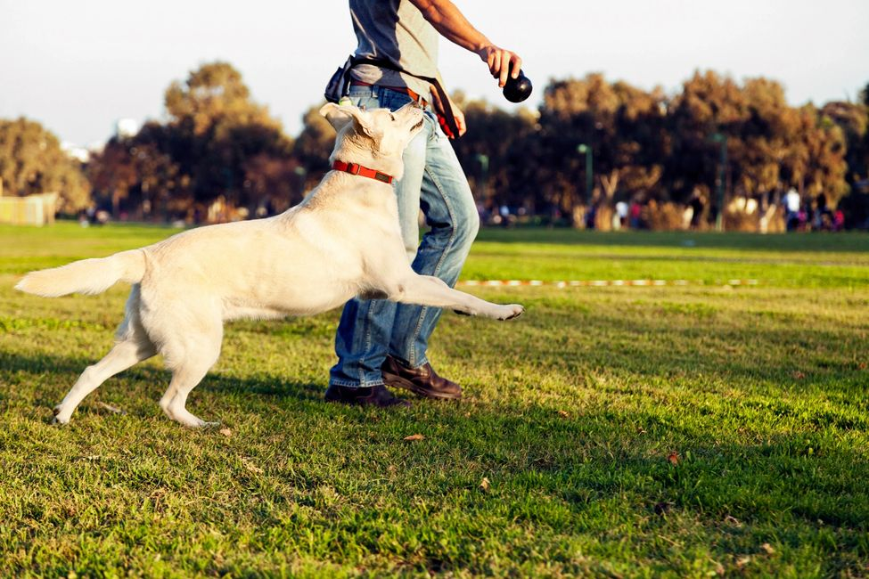 Dog Trainer, Dog Trainer San Diego, Dog Trainer Near Me, Dog Obedience, Dog Classes Near Me, Dog
