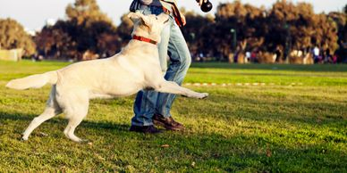 Happy Pets Services Loose Lead Walking Dog Training