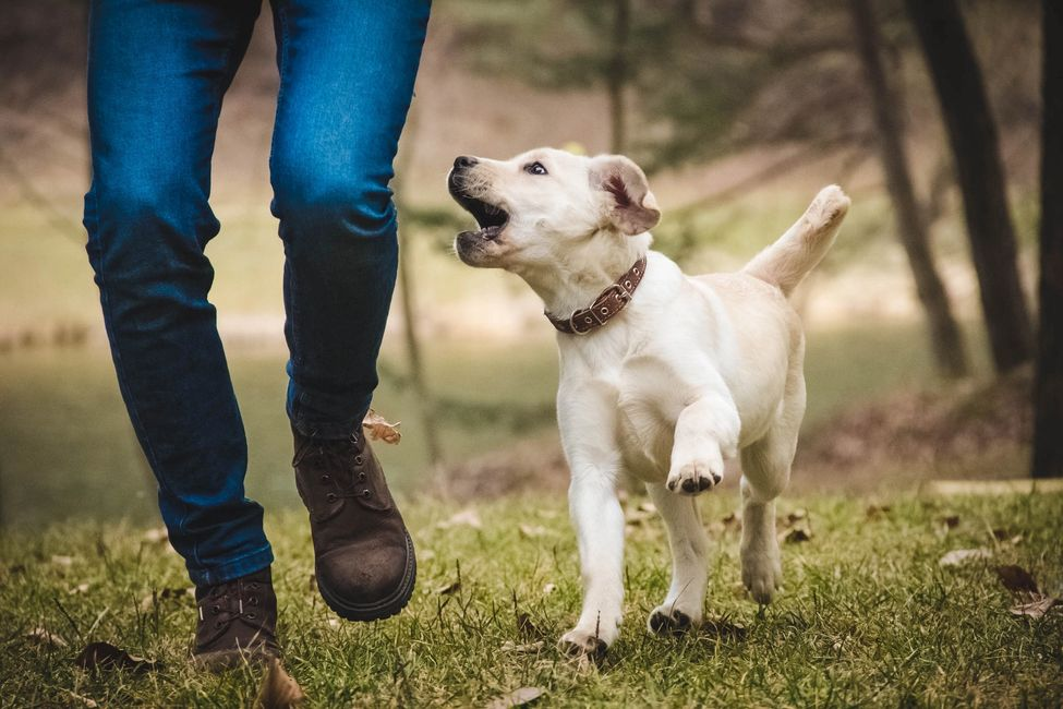 Dog Training in Canterbury  Dog Trainer Canterbury Puppy Training Canterbury Dog Trainer Canterbury