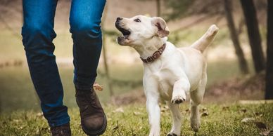 Happy Pets Services Recall Dog Training