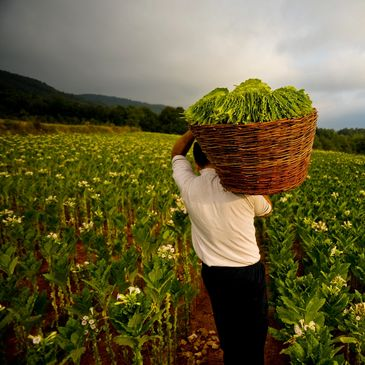 migrant farm worker carrying a basket of flowers.
