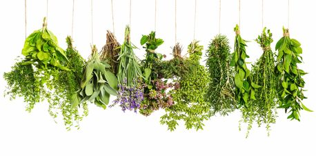 learn about herbs, herbalist classes, beginning herbalism, herb school in Califorina