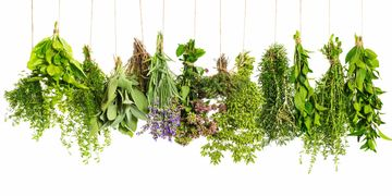 Picture of thyme herbs