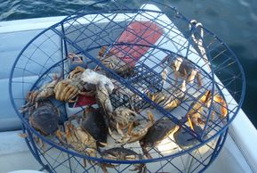 crabs in a basket on the boat