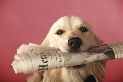 Dog with newspaper.